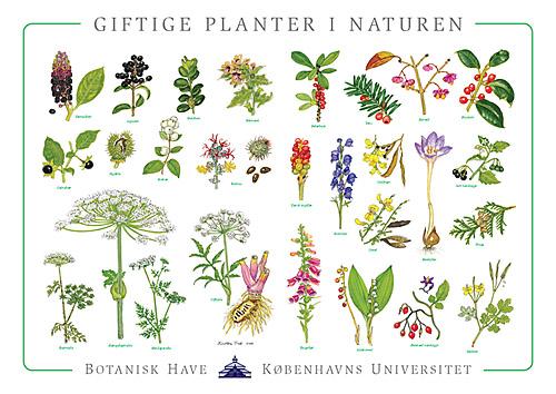 danmarks planter